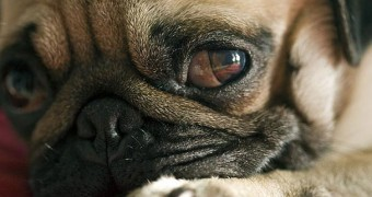 Эпилепсия у собак